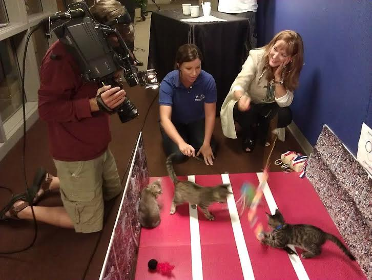 angela on camera with cats